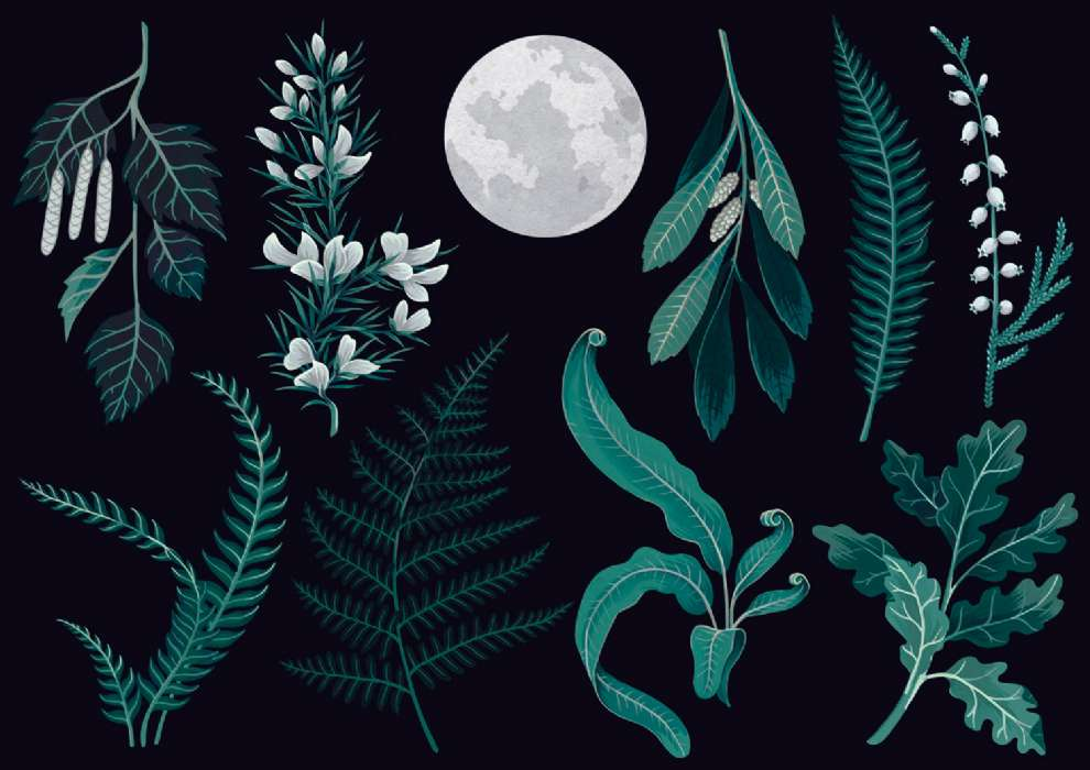 Charlotte Day, Painterly botanical illustration on a black background with the moon in a middle
