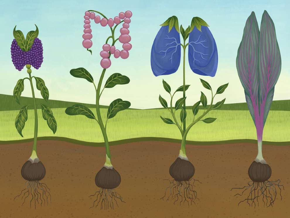 Charlotte Day, Conceptual painterly botanical illustrations. Plants looking like organs