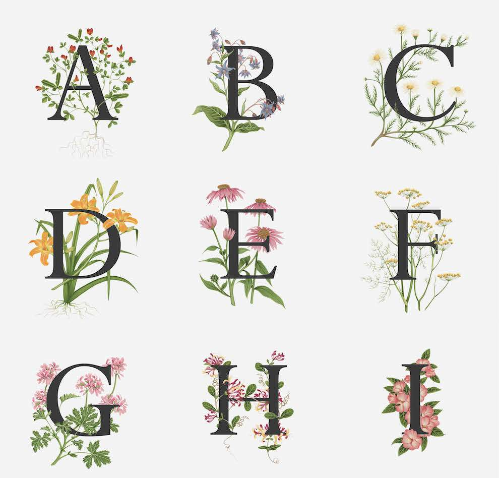 Charlotte Day, handpainted alphabet of edible flowers