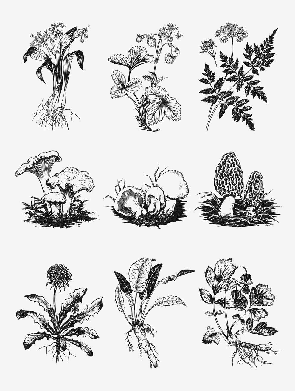 Charlotte Day, Detailed drawing of botanical elements including mushrooms.