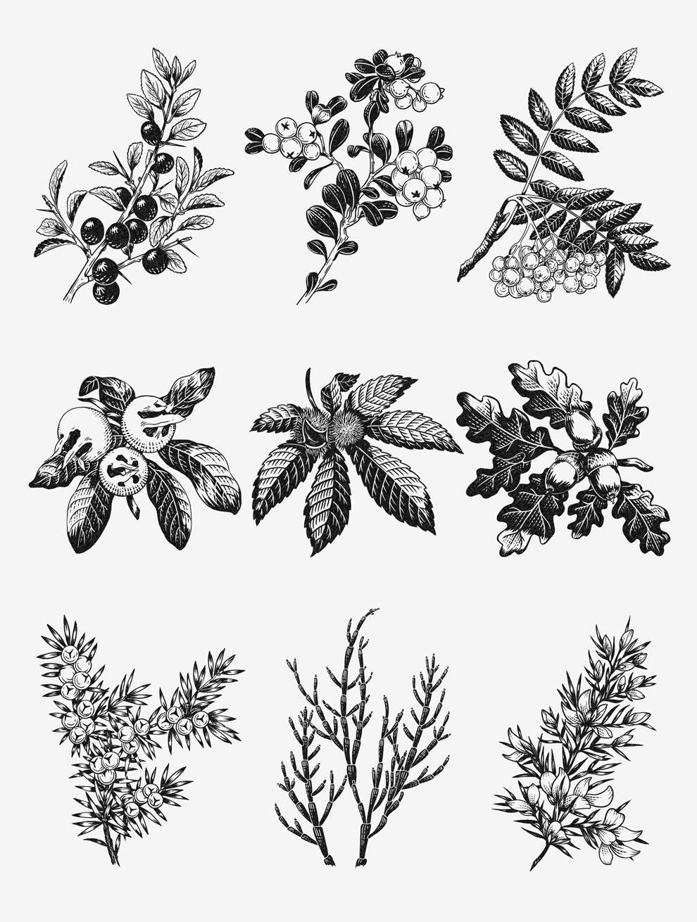 Charlotte Day, Detailed drawing of botanical elements.