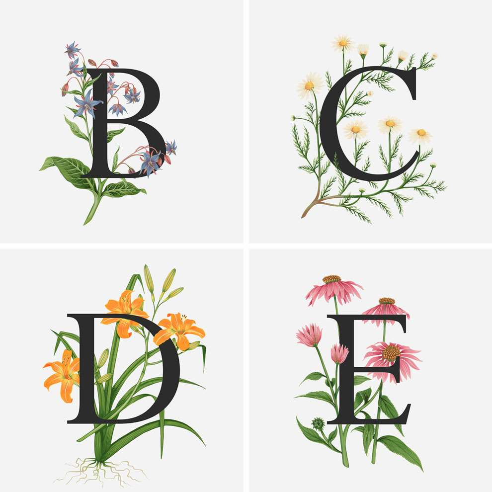 Charlotte Day, Black letters with decorative botanical elements, painterly details.