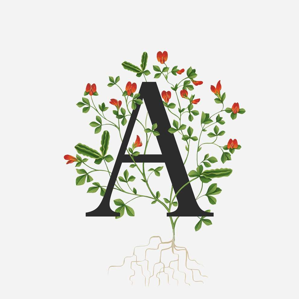 Charlotte Day, Black Letter A with decorative botanical elements on a white background.