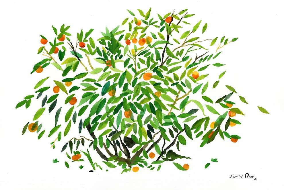 James Oses, Hand-painted orange tree