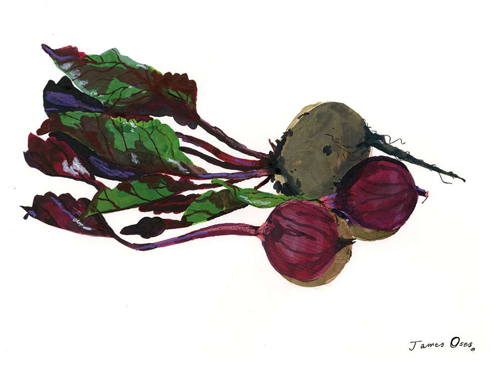 James Oses, watercolour illustration of beetroots