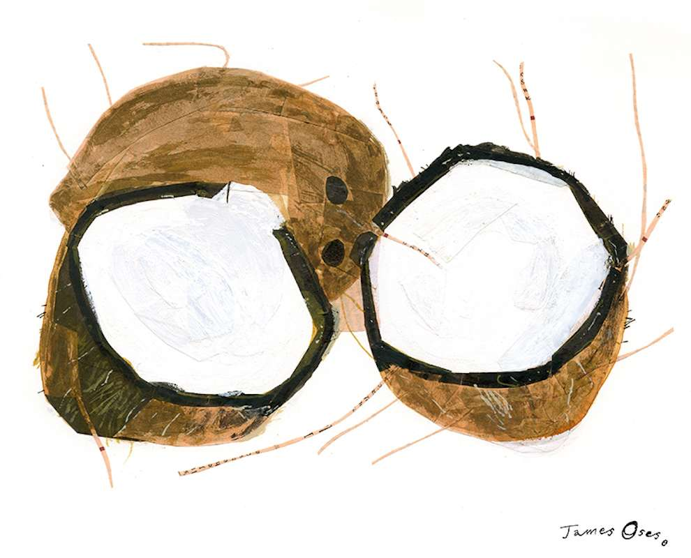 James Oses, Watercolour illustration of a coconut
