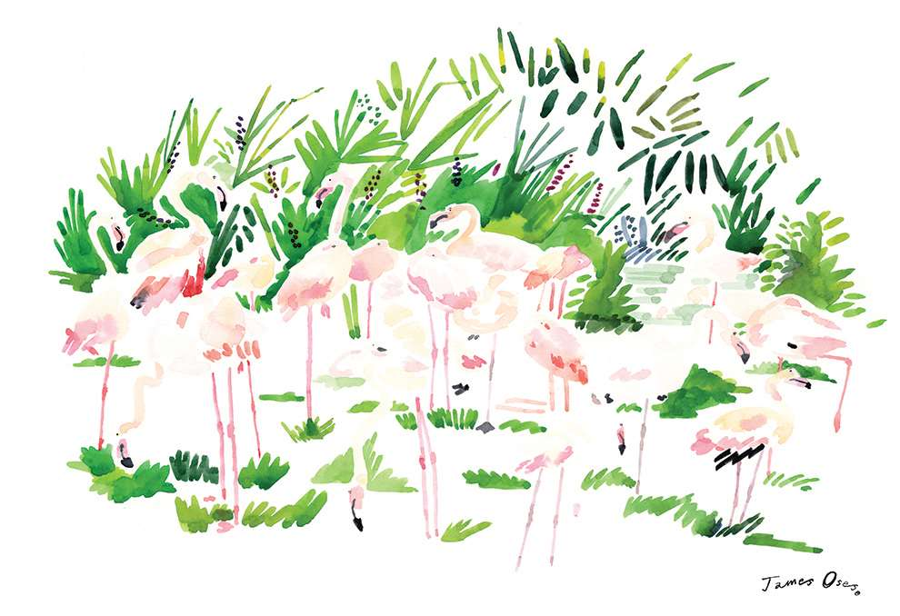 James Oses, Hand painted illustration of flamingos.