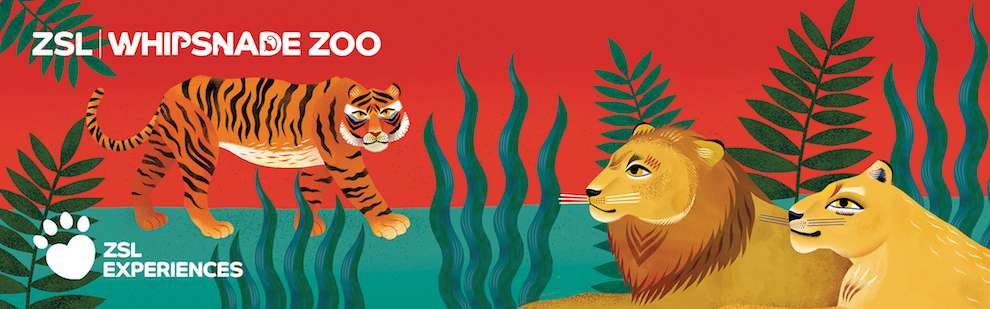 Margaux Carpentier, Illustration for London Zoo experience ticket. Lion, lioness and a tiger in the Savana