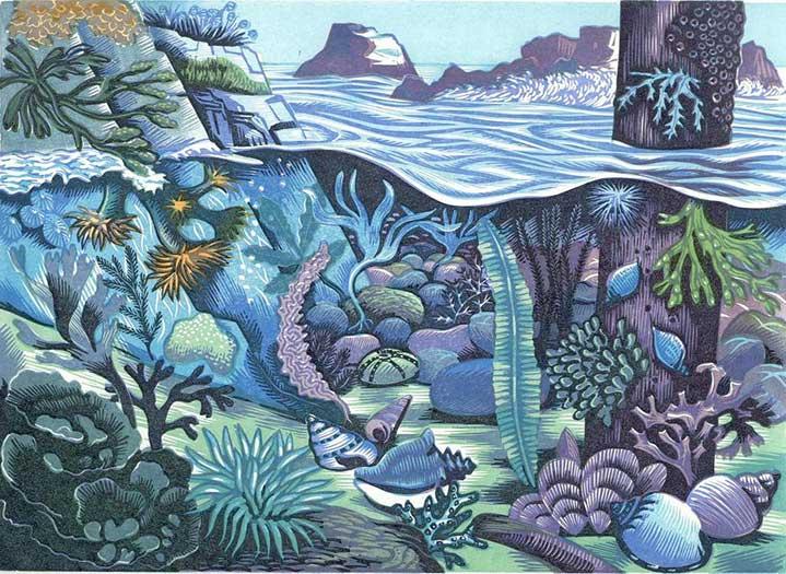 Jeremy Sancha, Jeremy sancha, print of underwater scene, natural history