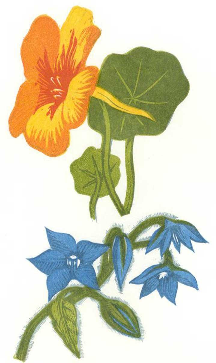 Jeremy Sancha, Traditional Botanical woodcut illustration