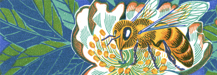 Clare Melinsky, Linocut illustration of a bee