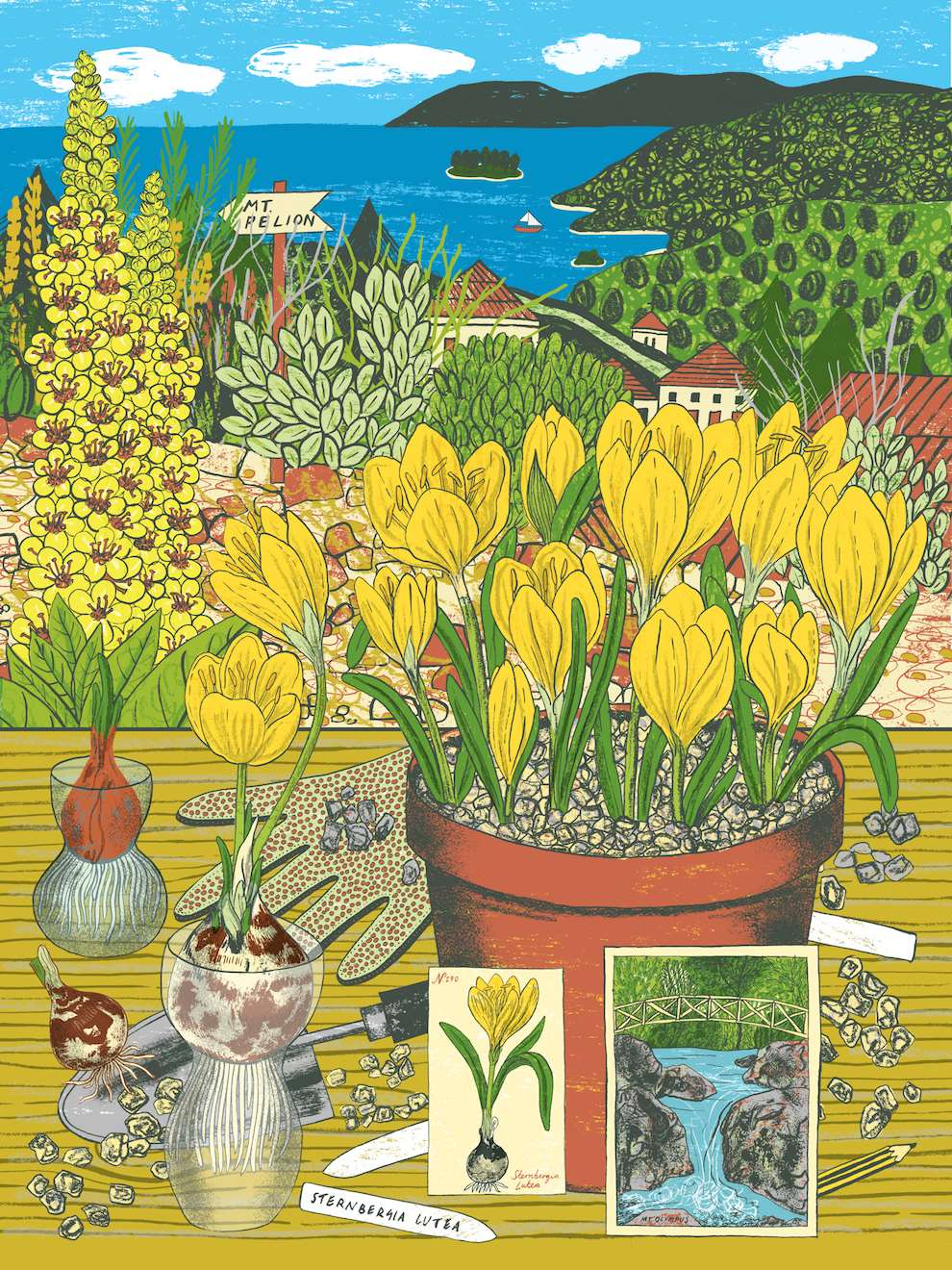 Alice Pattullo, Bright and colourful botanical illustration. Garden scenery for Gardens Illustrated.