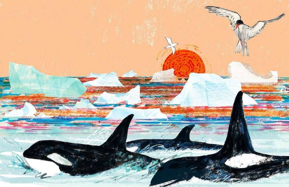Jill Calder, Bright and colourful hand drawn illustration of Killer Whales swimming