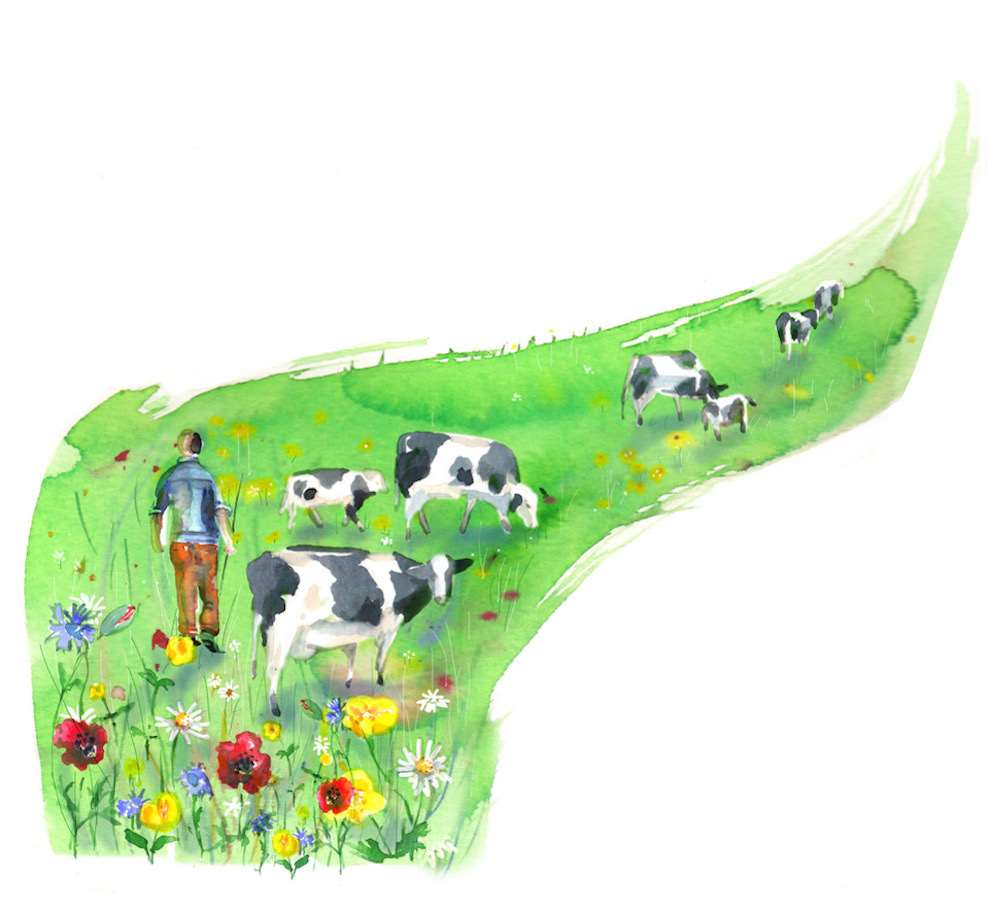 Lesley Buckingham, Watercolour illustration of a man in a cow field