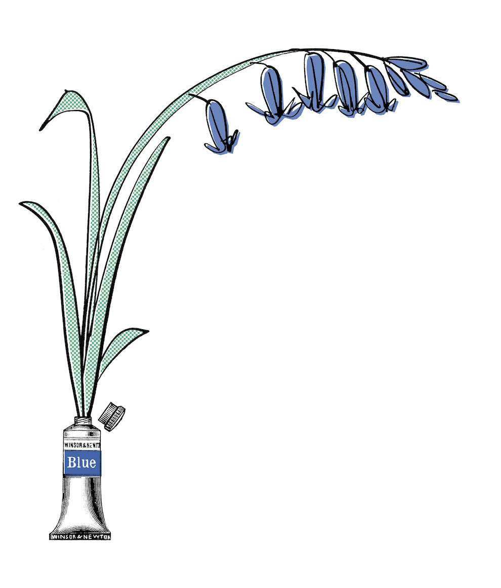 MH Jeeves,  Blue lily illustration coming out of a blue paint tube
