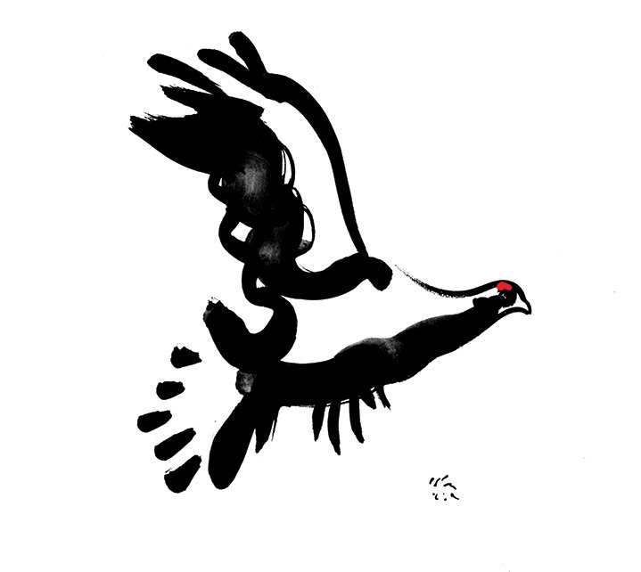 Brian Grimwood, Black brush line illustration of a dove