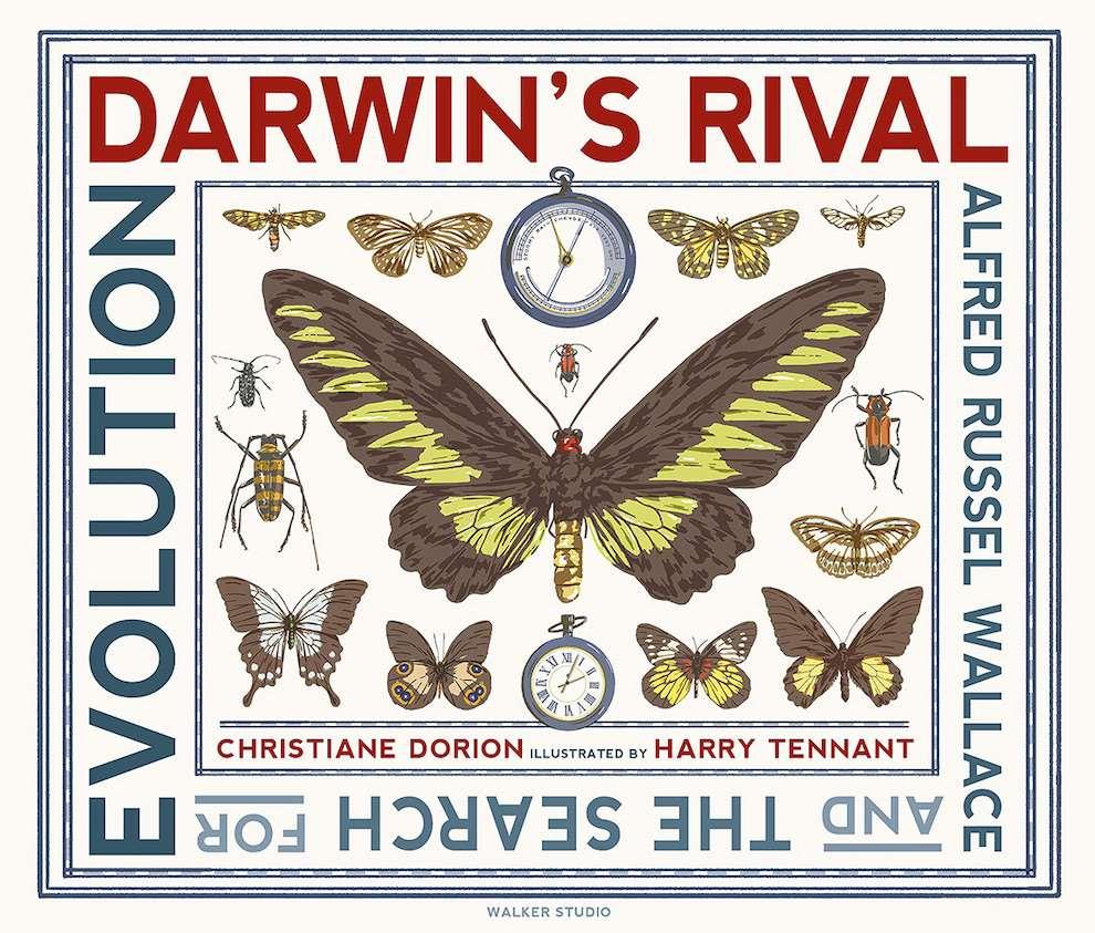 Harry Tennant, Screenprint scientific illustration of butterflies