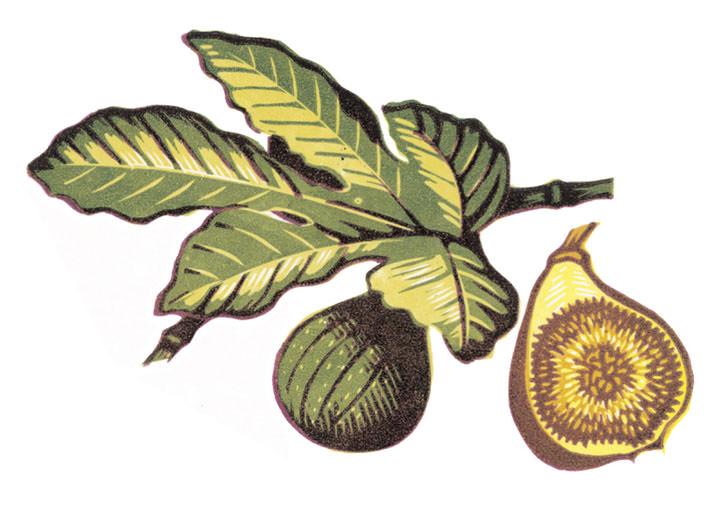 Jeremy Sancha, Botanical woodcut illustration