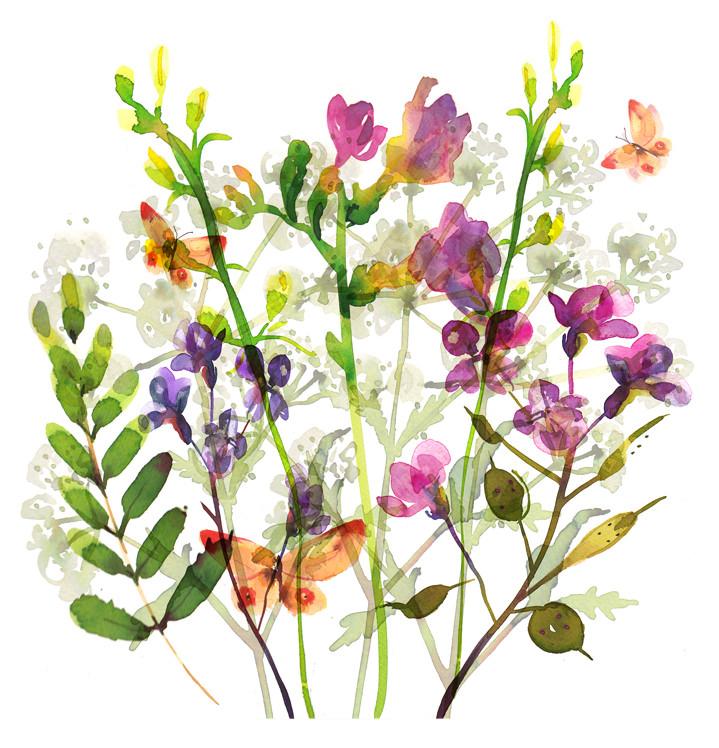 Lesley Buckingham, Botanical watercolour illustration
