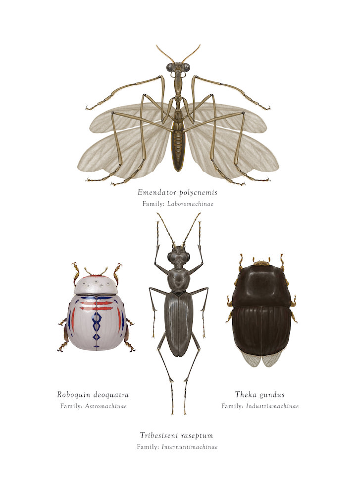 Richard Wilkinson, fantasy insect ecological illustrations of star wars characters in a detailed realistic drawn style.
